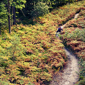 Mountain Biking in the Surrey Hills