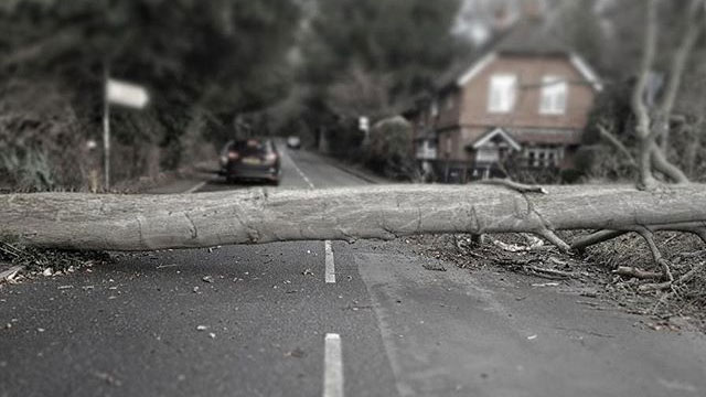 Maison du Velo tree down at Box Hill