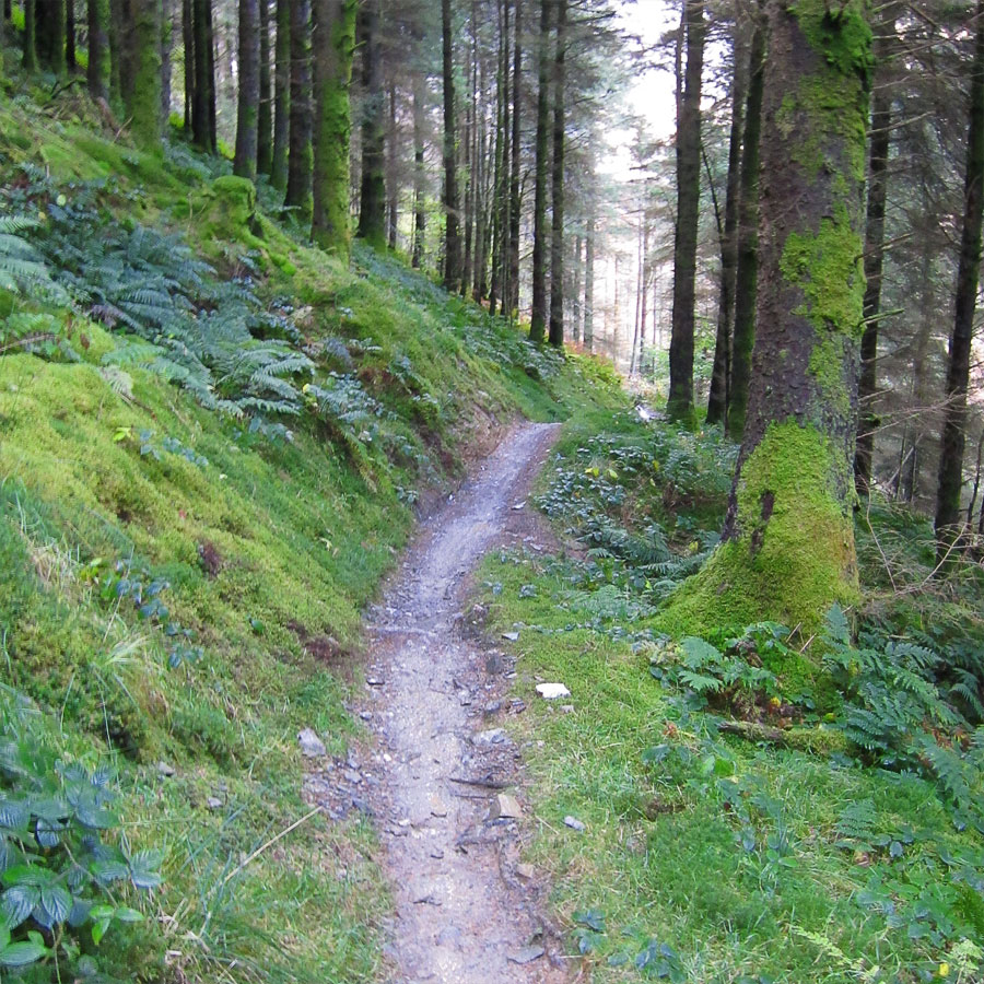 Typical Penmachno trail