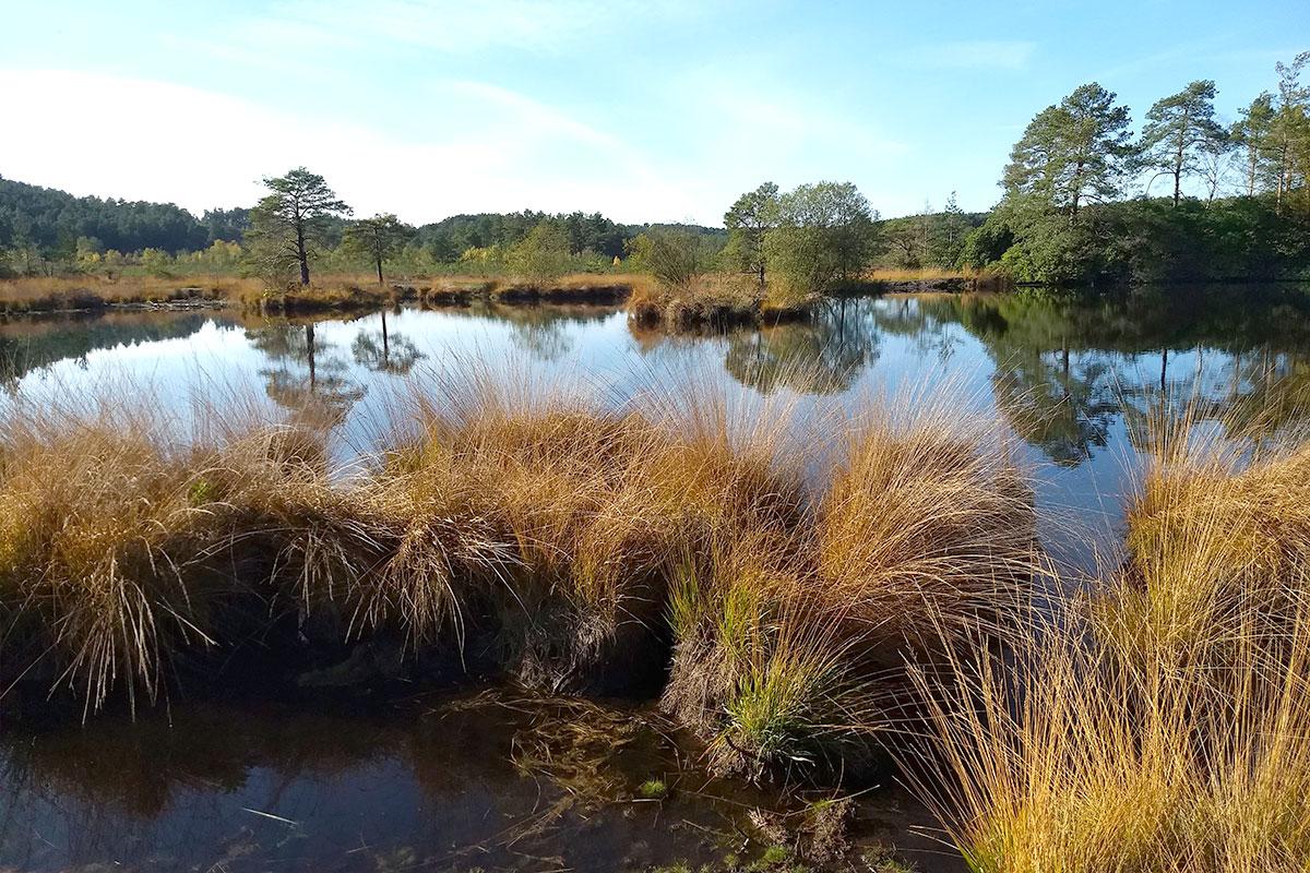 Rushmoor Pond