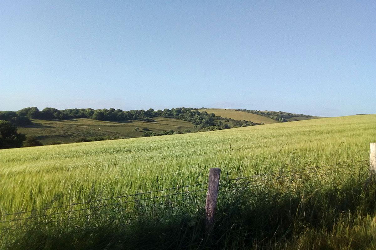 SDWIAD - Alfriston Hill